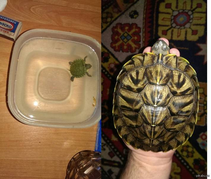 Почему черепаха спит и ничего не ест