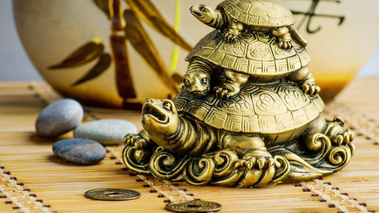 Значение змеи, жабы, черепахи и других земноводных в фэн шуй
