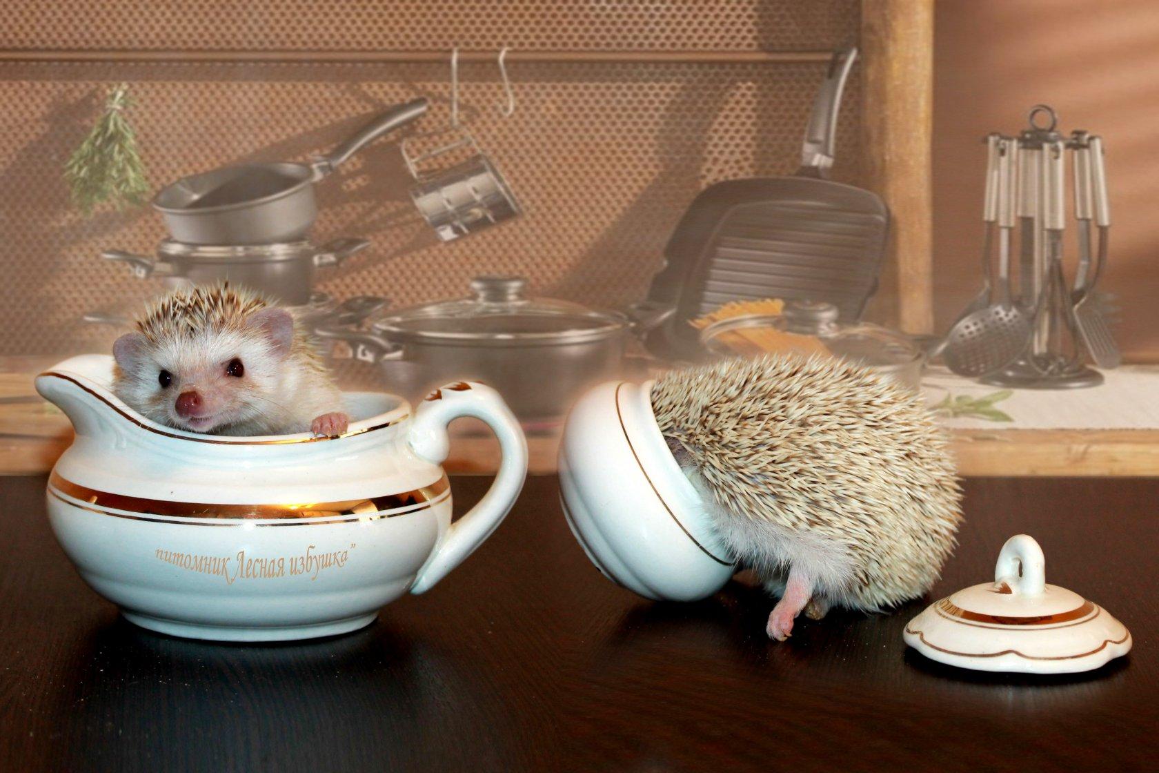 Питание: чем кормить ежика в домашних условиях