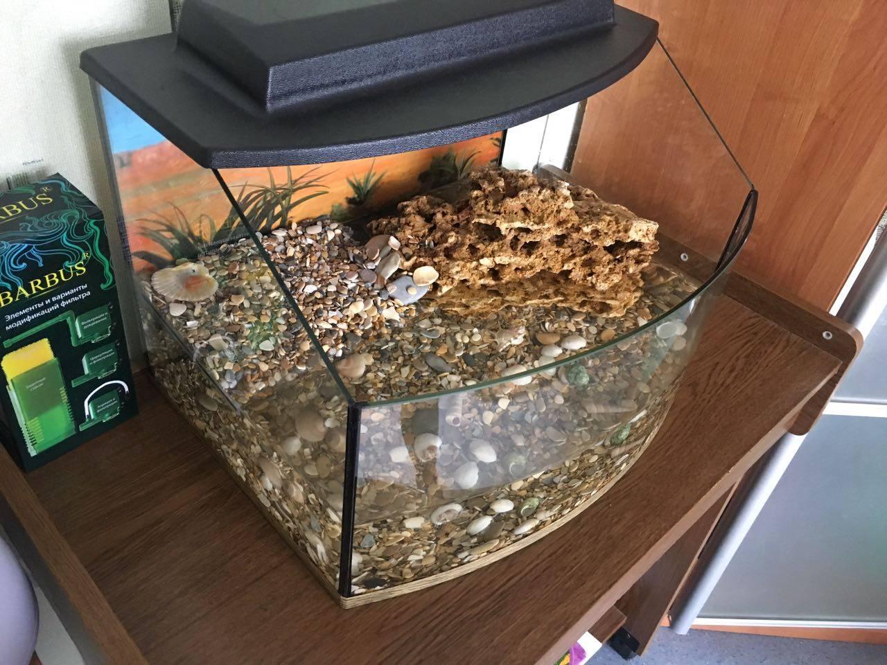 Аквариум для красноухой черепахи: обустройство и оформление акватеррариума, чем украсить резервуар