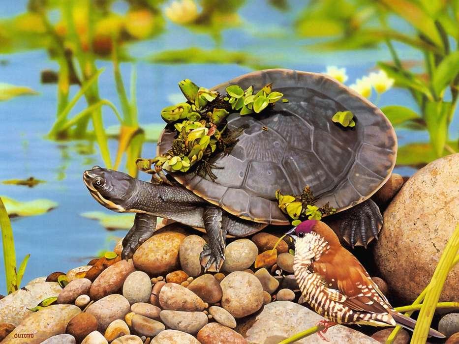 что, если профессиональное фото с черепахами базы отдыха