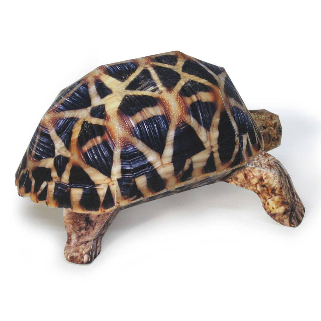 Индийская звездчатая черепаха (описание, места обитания, содержание)