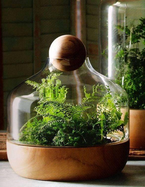 Что можно вырастить из косточки в домашних условиях? | топ-28 обычных и необычных растений | (фото & видео) +отзывы