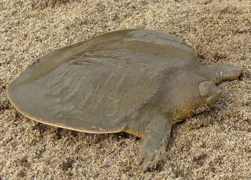 Atlantic turtle скачать все песни в хорошем качестве (320kbps)
