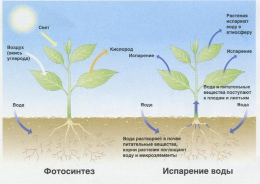 """Голый землекоп при недостатке кислорода может превращаться в """"растение"""""""