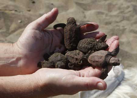 Черепаший пляж алагади, кипр, alagadi beach. фото, видео, отзывы, гостиницы рядом, как добраться – туристер.ру