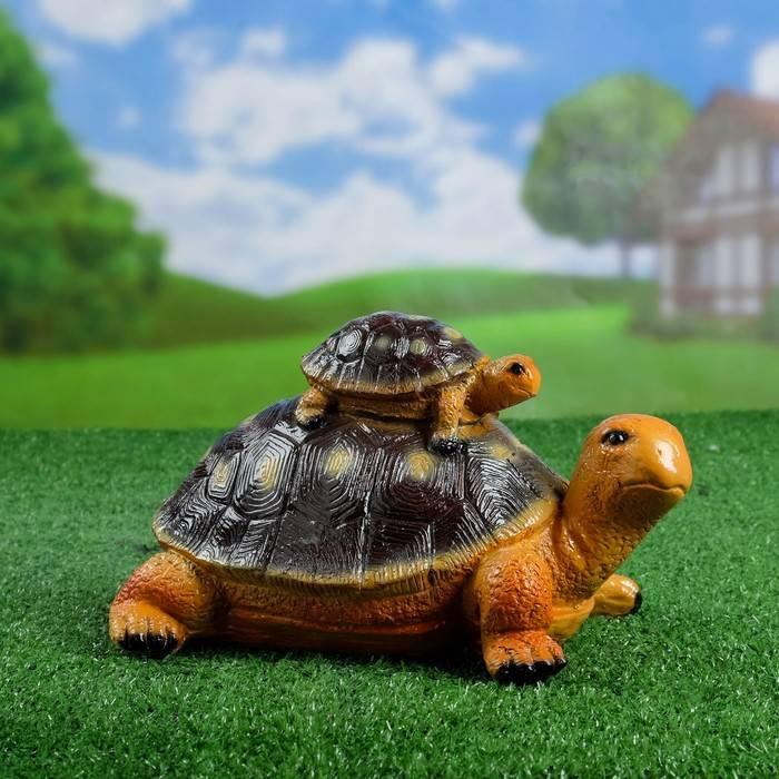 Mauremys caspica (каспийская черепаха)