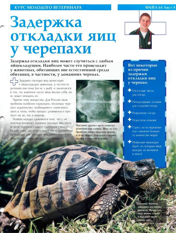 Задержка откладки яиц.. черепахи