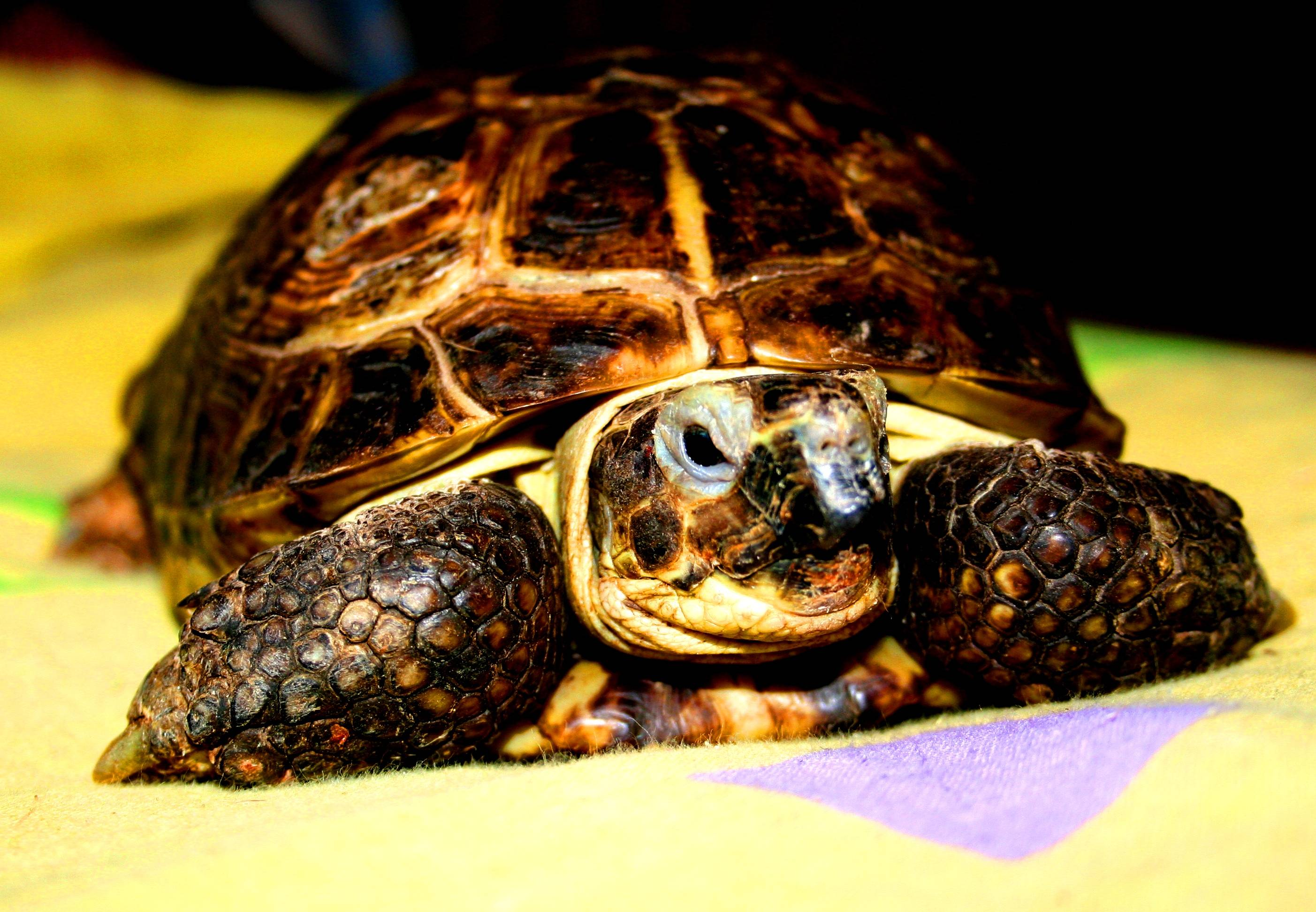 Что лучше сухопутная или водная черепаха. всё, что нужно знать о уходе за черепахой в домашних условиях. уникальная морская черепашка