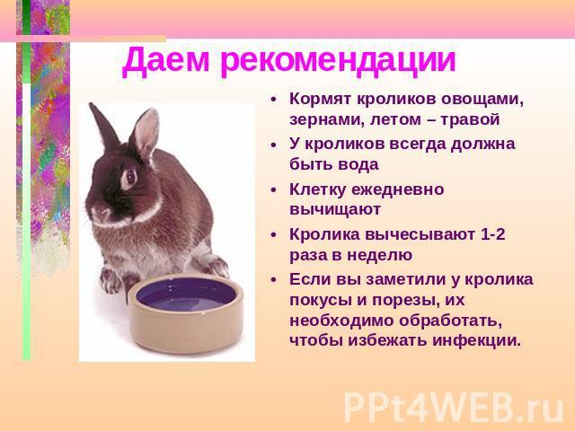 Питание декоративных кроликов: чем можно кормить, а чем нельзя