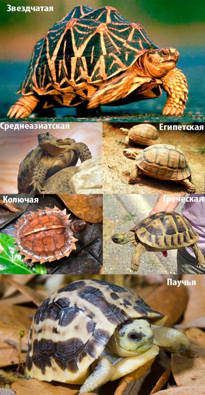 Чем кормить водную черепаху