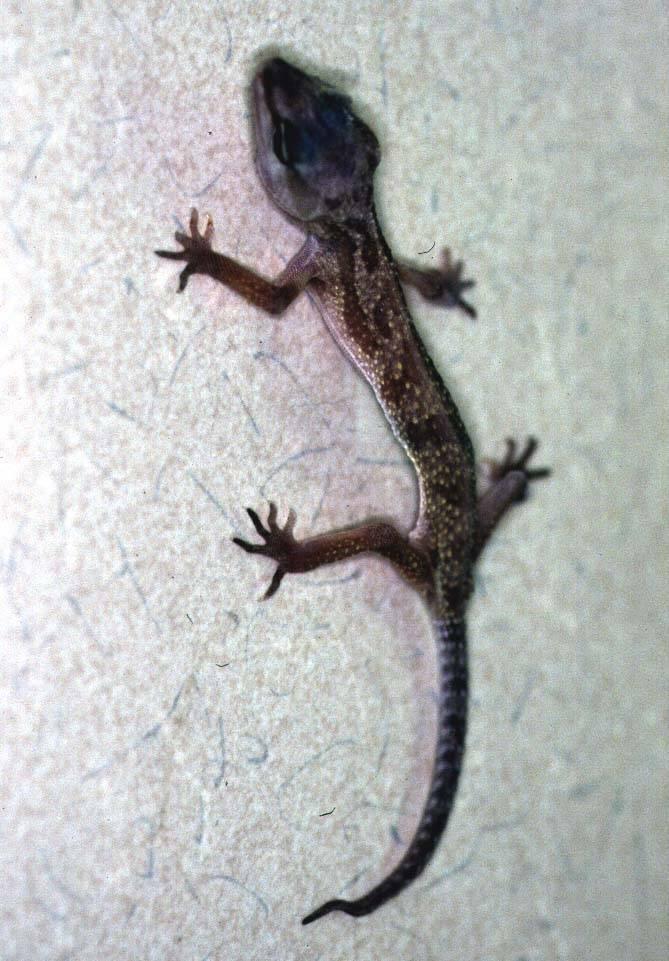 Болезни рептилий: симптомы и лечение