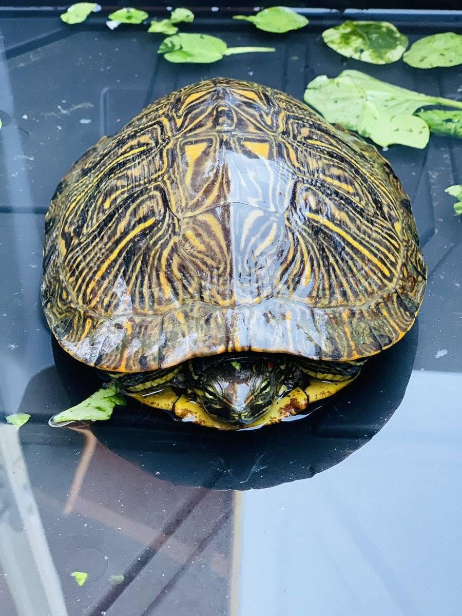 20 любопытных фактов о черепахе, а также разведение, спячка и анатомия