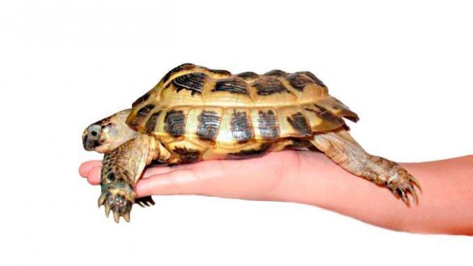 Болезни черепах | мои домашние питомцы