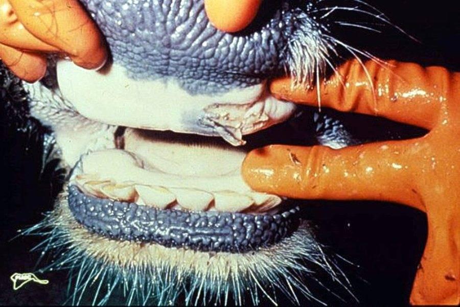 Вирусные заболевания рептилий