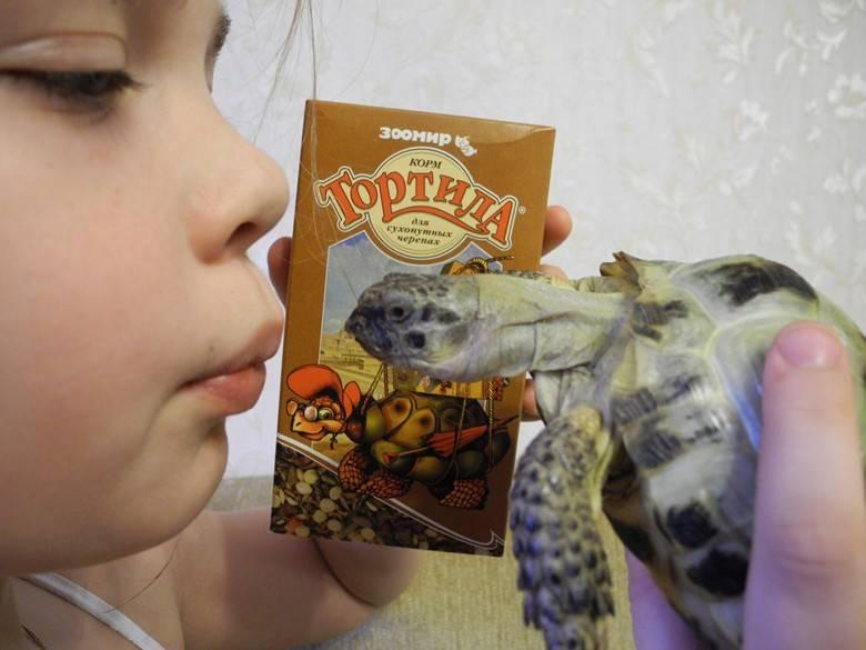 Приручение сухопутных и красноухих черепах