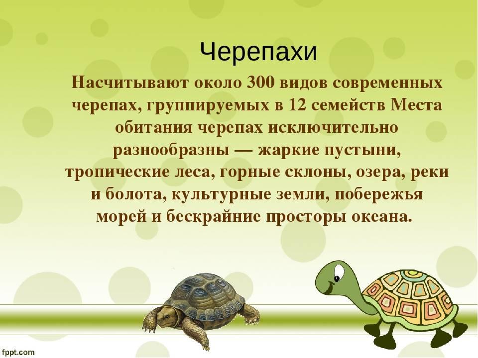 Мифы, ошибки и заблуждения о черепахах. все виды черепах. их разновидности и классификация1 min read черепахи и их жизнь