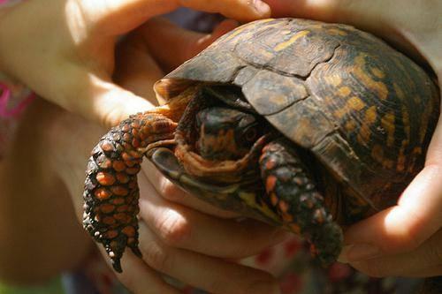 Как можно назвать черепаху