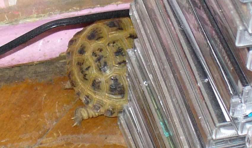 Про красноухую черепашку - запись пользователя tigra (id1330699) в сообществе домашние животные в категории хотим завести зверушку - babyblog.ru