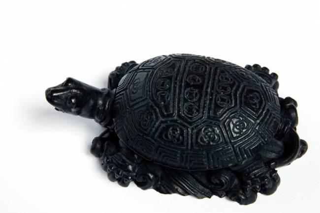 Символ и тотем черепахи – тише едешь, дальше будешь | знаки и символы