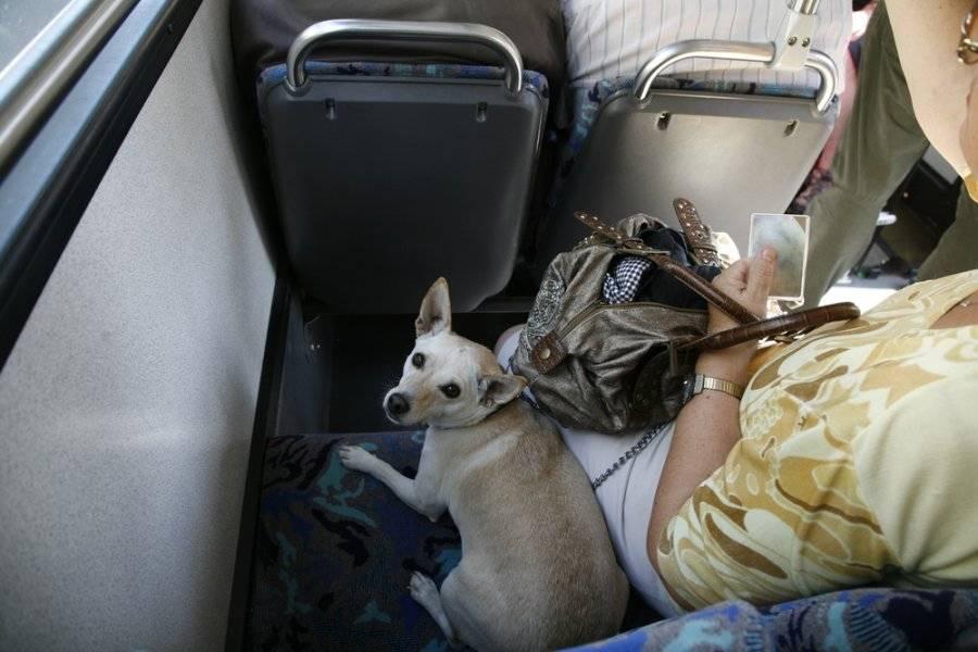 Бесценный опыт: перевозка собаки в самолете