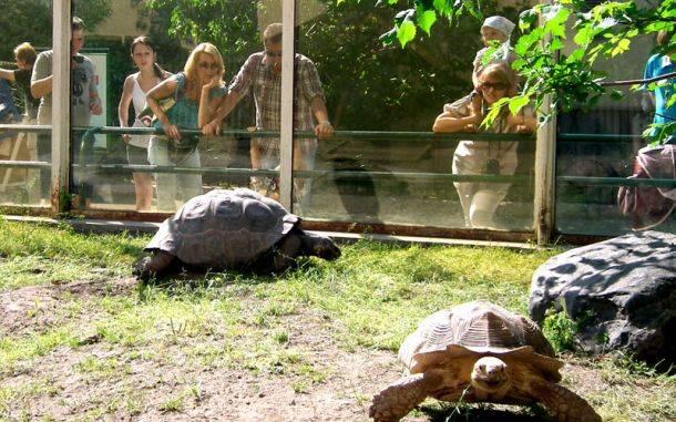 Как сделать террариум для сухопутной черепахи своими руками?