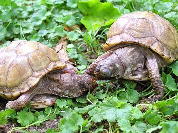 Чем кормить черепах в домашних условиях?