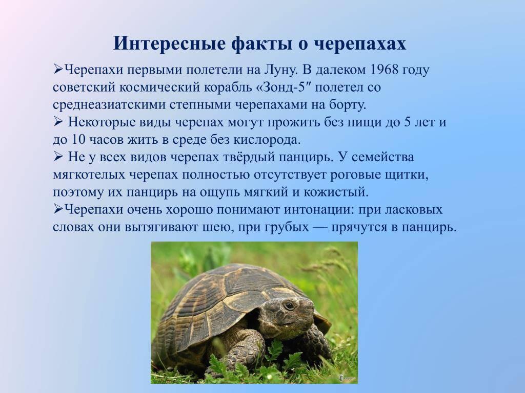 Черепаха земноводное. мифы, ошибки и заблуждения о черепахах. сколько живут черепахи