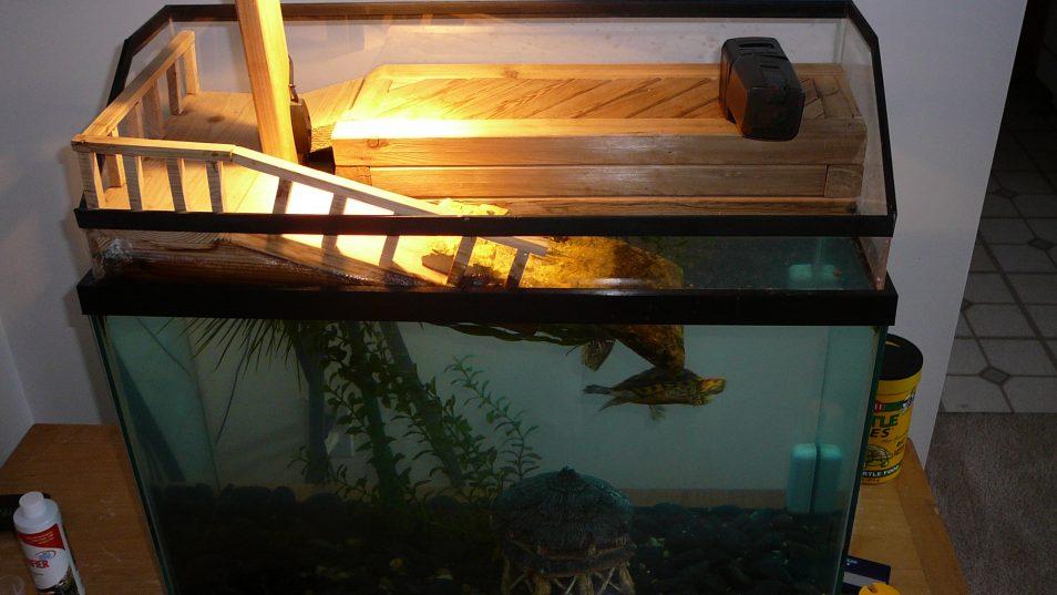 Что нужно для красноухой черепахи