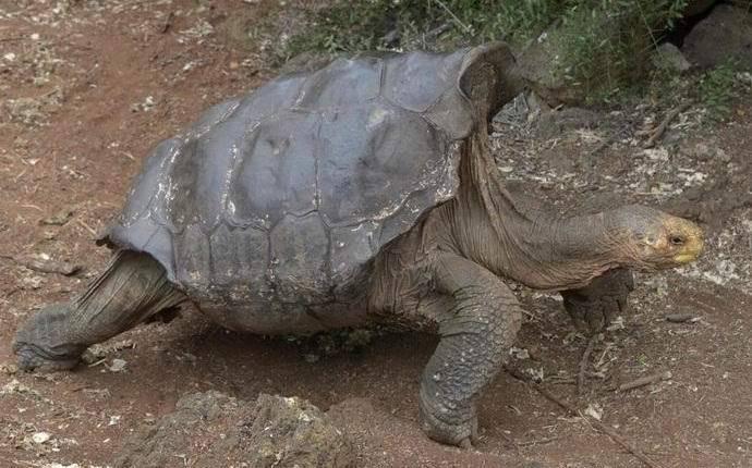 Животные, вымершие после 1600 года википедия