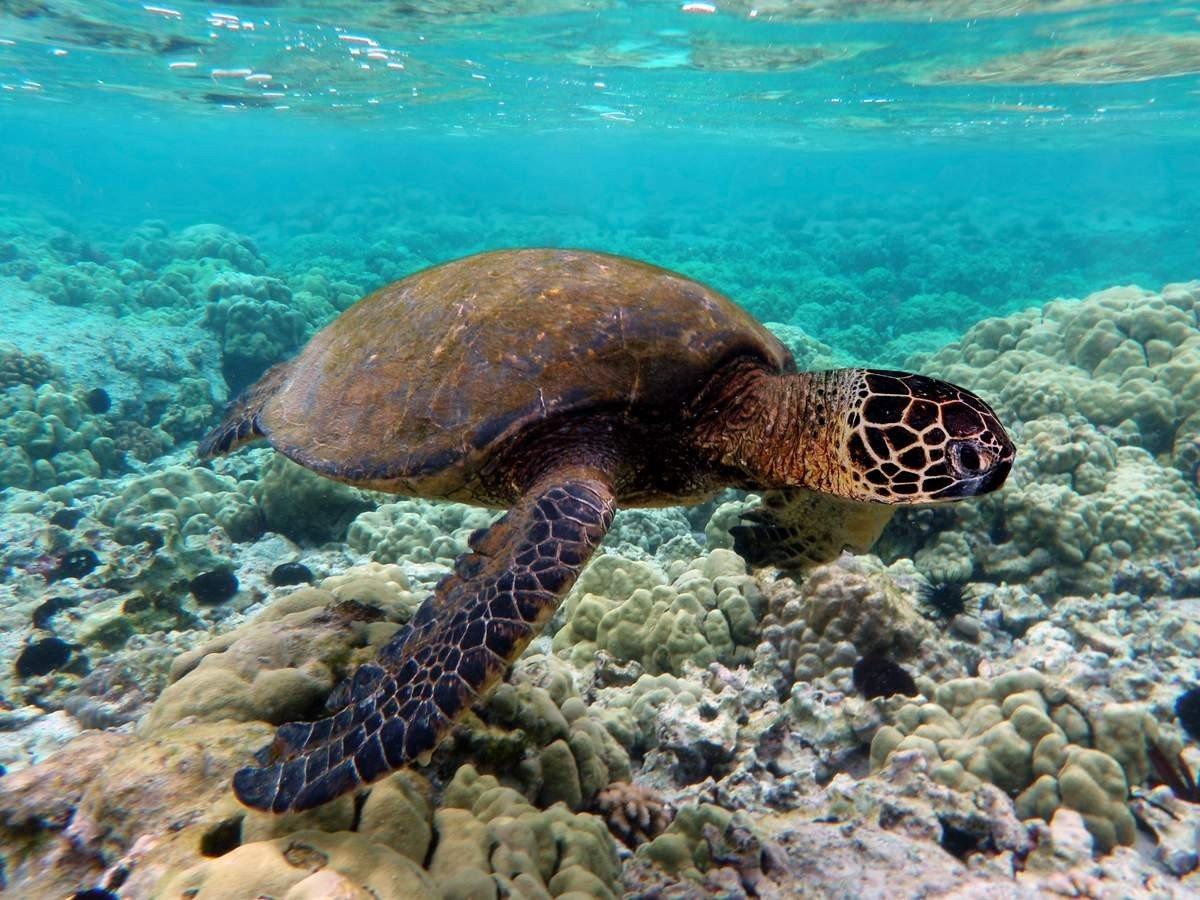 Морские черепахи в дикой природе