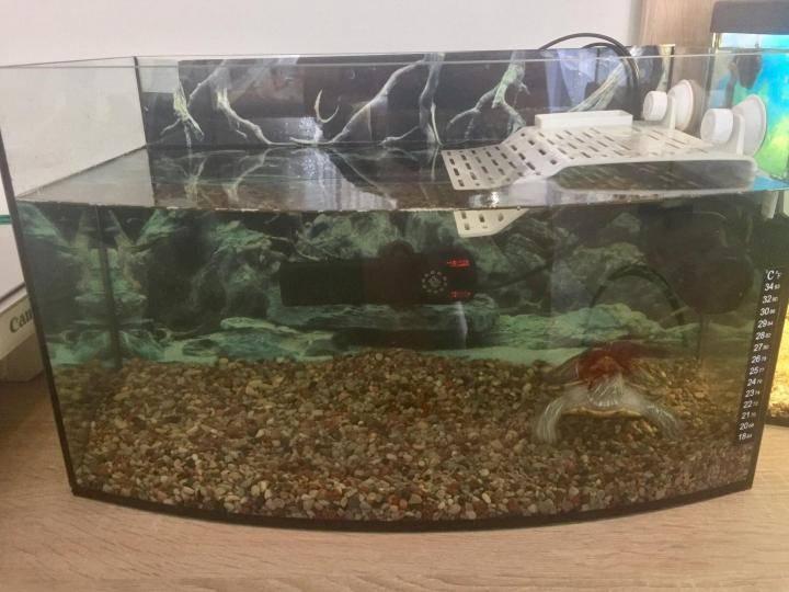 Как обустроить акватеррариум для водных черепах