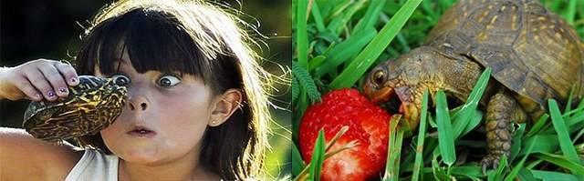Аллергия на черепах: возможно ли такое?