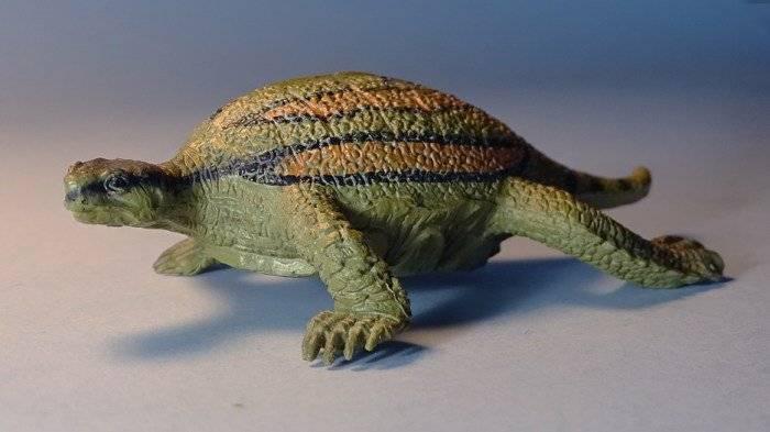 Odontochelys — wikipedia republished // wiki 2