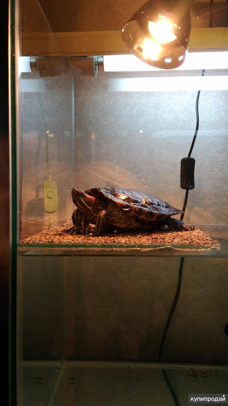 Ультрафиолетовое освещение для террариумов с черепахами