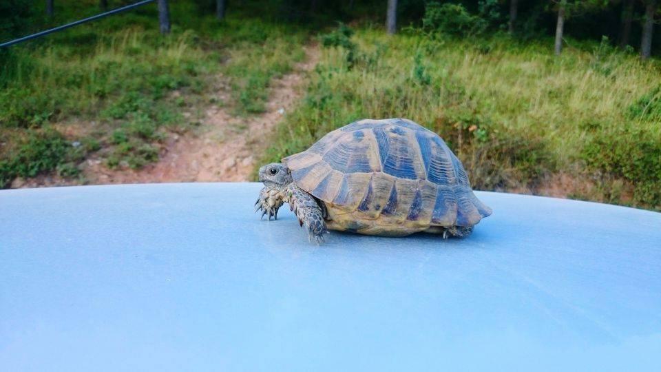 Транспортировка черепах по городу, вет.справка ф.4. как перевозить черепаху? простые правила перевозки1 min read можно в поезде провозить черепашек