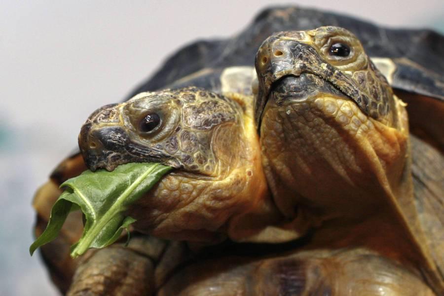 15 ужасающих фотографий животных-мутантов (16 фото)