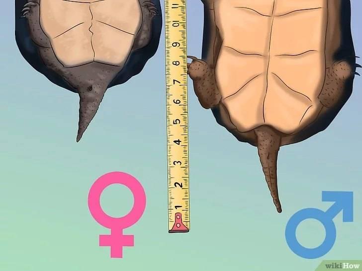 Стоит ли заводить дома черепаху? как выбрать черепаху для дома? какую лучше черепаху выбрать? практические рекомендации1 min read можно ли заводить черепаху ребенку