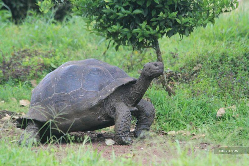 Верхом на гигантской черепахе - ферма в джозани форест на занзибаре