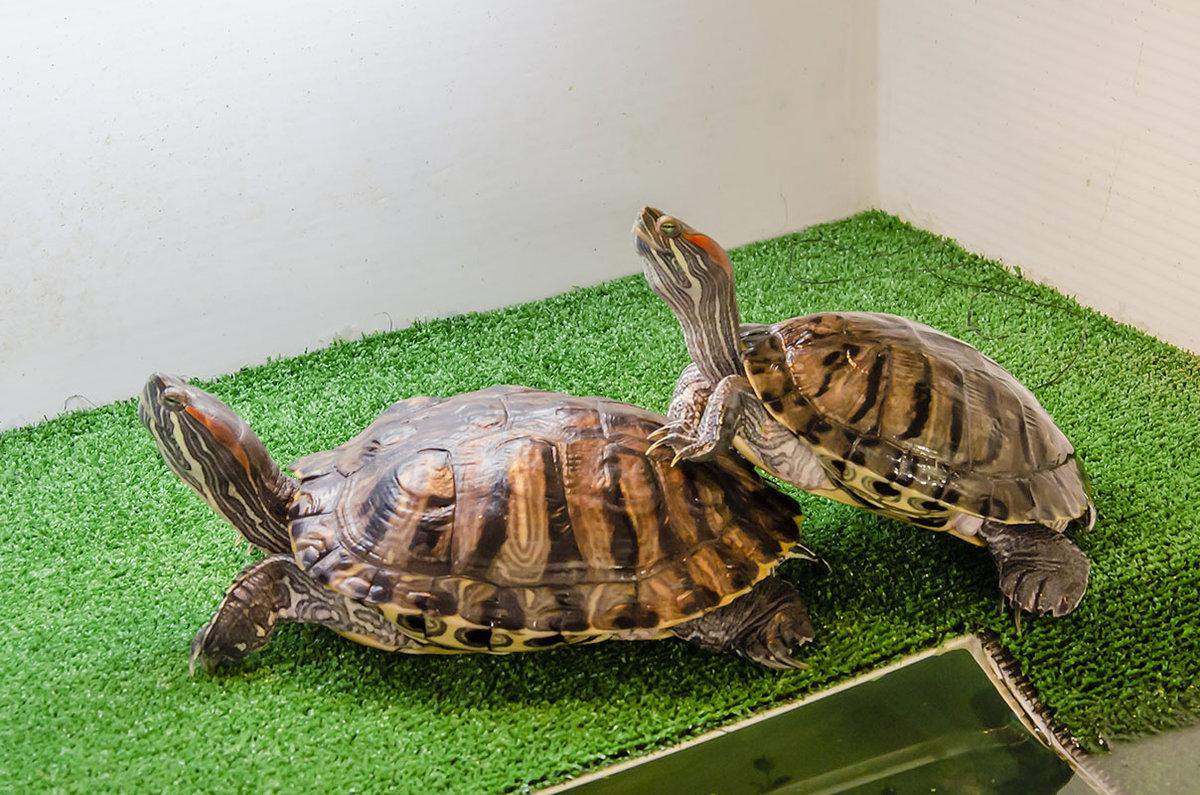Как назвать черепаху, имя для черепахи