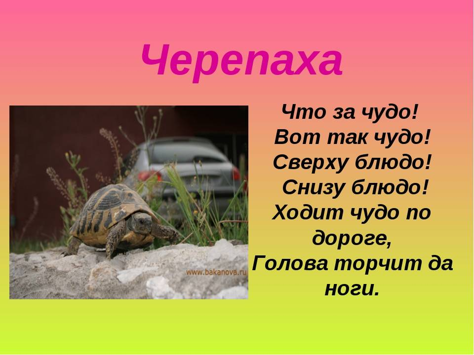 Загадки про черепаху с ответами
