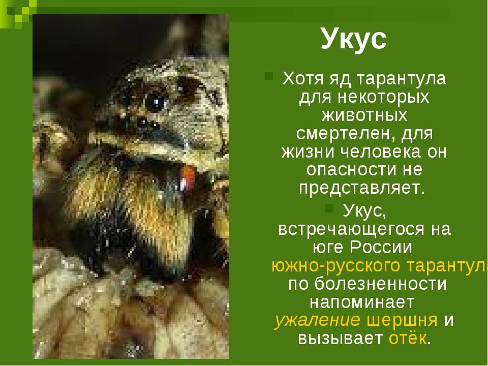 Укус тарантула