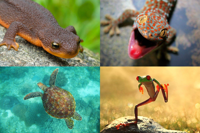 Земноводные. отличие земноводных от других животных