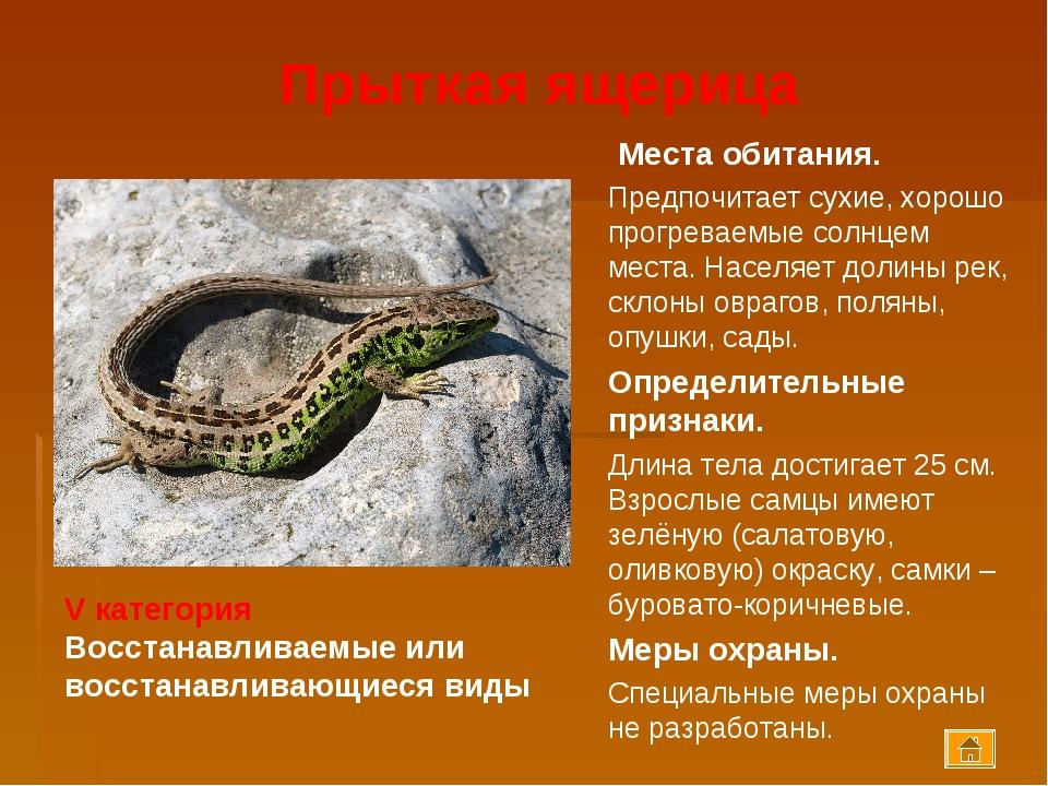 Прыткая ящерица