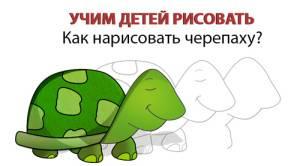 Черепаха на даче — особенности содержания экзотического питомца