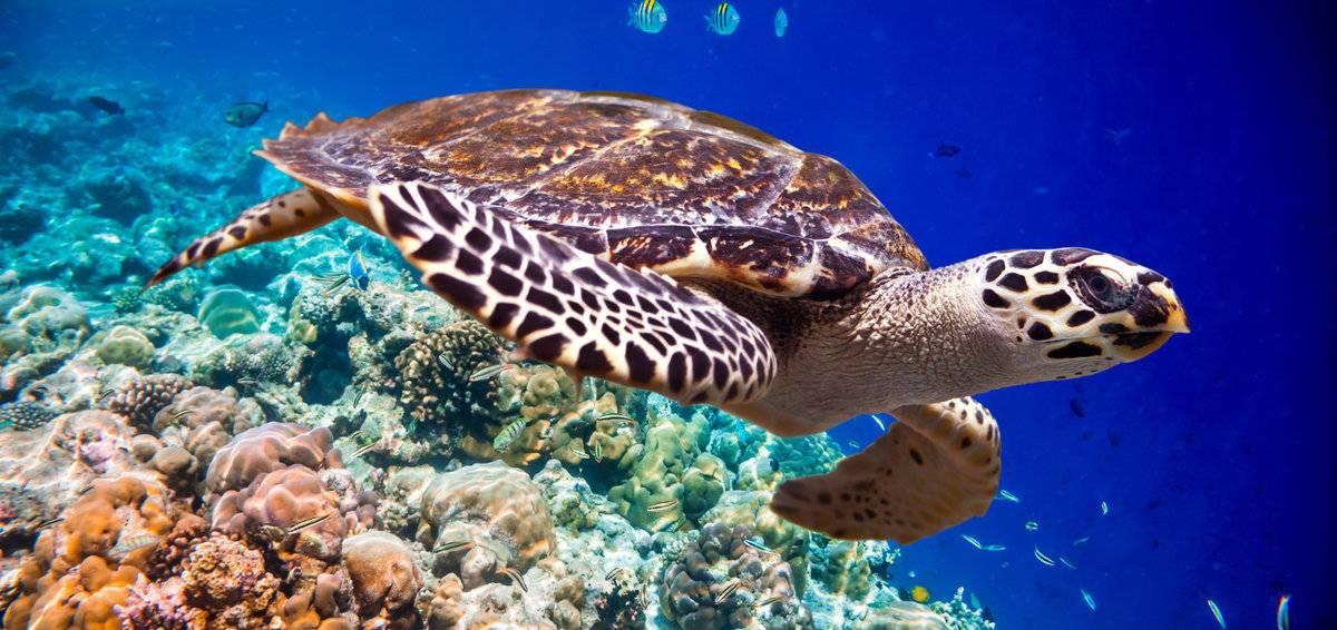 Морские черепахи