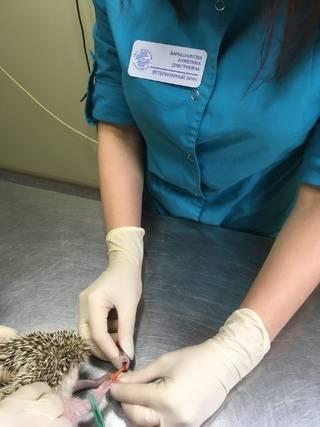 Инфузионная терапия рептилий