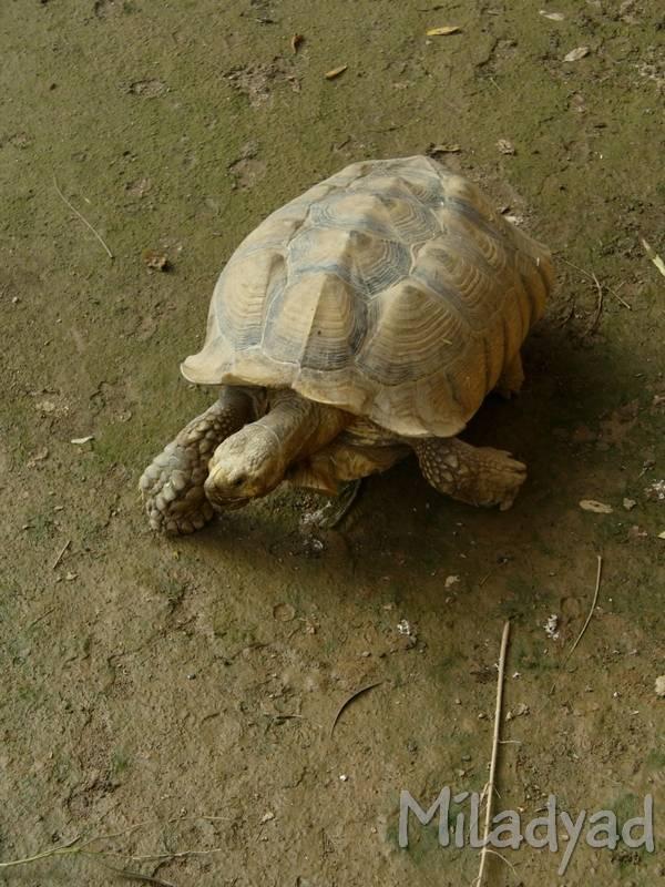 Верхом на гигантской черепахе - ферма в джозани форест на занзибаре - дневник путешественника