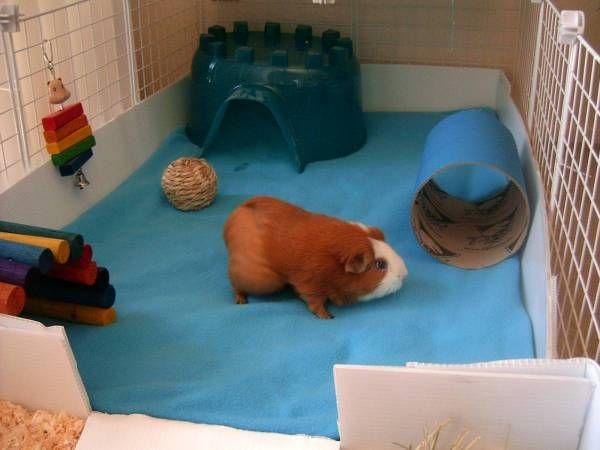 Игрушки для морской свинки