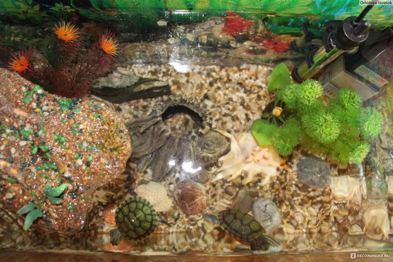 Как правильно обустроить аквариум для черепах?